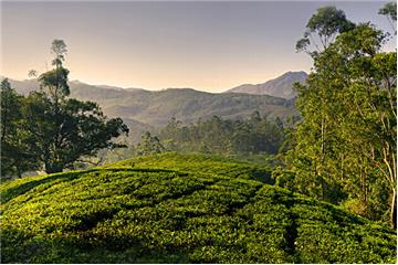 Affordable Kerala Honeymoon Tour | Best Hill Station Honeymoon Packages Kerala